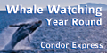 Condor Express & Whale Watching